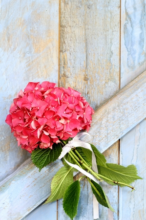 Bouquet of pink hydrangea tied with ribbon hanging on a painted wooden barn door, shabby chic, rustic wedding decoration photo