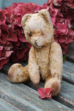 Vintage old teddy bear sat on a wooden weathered bench surrounded by autumnal pink hydrangea blooms, shabby chic, rustic image photo