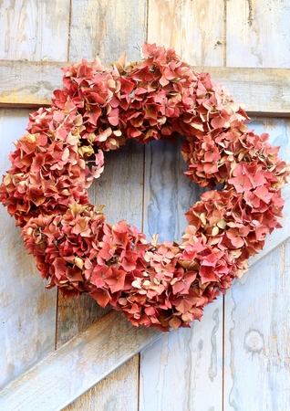 An autumn wreath of faded hydrangea flowers hanging on a blue, rough painted wooden barn door, a rustic, shabby chic image photo