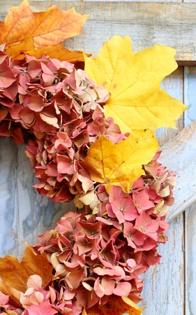 An autumn wreath of faded hydrangea flowers and autumn leaves hanging on a blue, rough painted wooden barn door, a rustic, shabby chic image photo