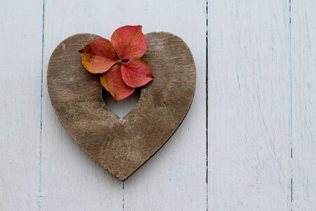 Slate colored wooden heart with autumn faded pink hydrangea flowers and petals on duck egg blue painted floorboards photo