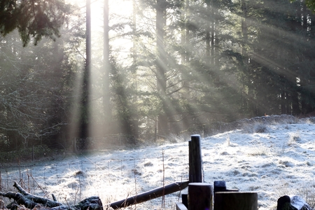 lake district england: winter sun beams through the trees in Grizedale Forest, Lake District, England , UK. A star winter snow scene of light rays, white snow, fence and pine trees Stock Photo