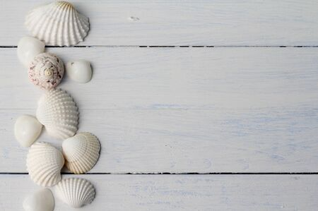 floorboards: Border pattern of white British sea shells in a row on white painted floorboards, cockle shells, winkles and caycay, could be used for spa, wedding or seaside shabby chic