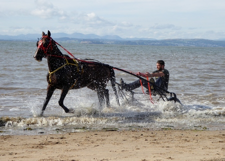 Morecambe , Lancashire, UK 4th August 2018 . Horse trap racers cooling down the horses in the sea on a hot summers day on a British beach