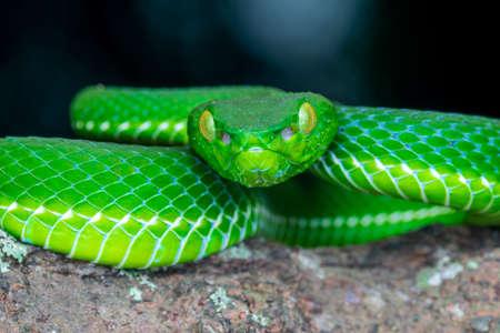 green snake portrait - wildlife photography