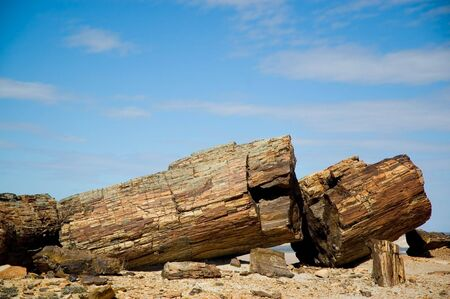 petrified fossil: Petrified wood in Patagonia, Southern Argentina. Stock Photo