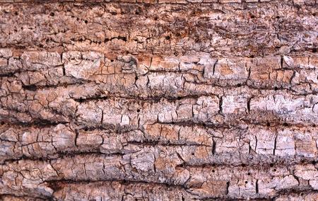 ワームで穴を開けて、古い樫の木の樹皮を背景