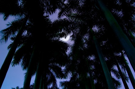 waning moon: Waning moon with grass in night piec.