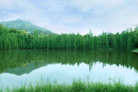 inverted: green trees with inverted image in lake.