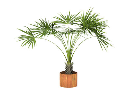 tropical plant model pot culture on white background, 3d digitally generated image. Stock Photo