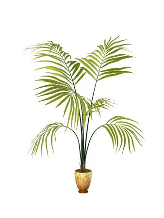 tropische plant in cultuur van de pot op witte achtergrond, Stockfoto