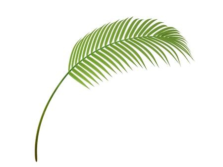 tropische plant fernleaf hedge bamboetak Stockfoto