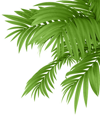 plant pot: tropical plant fernleaf hedge bamboo branches on white background,