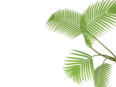 bosk: tropical plant fernleaf hedge bamboo branches on white background,