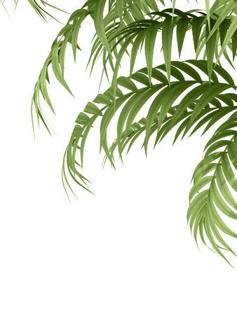 흰색 배경에 열대 식물 fernleaf 헤지 대나무 가지,