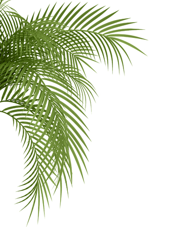 tropical plant fernleaf hedge bamboo branches on white background,