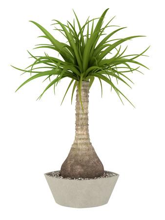 白い背景の上のポット栽培熱帯植物
