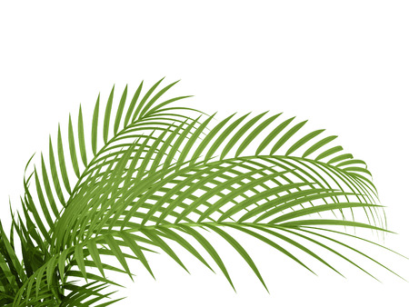 tropical plant fern leaf hedge bamboo branches on white background