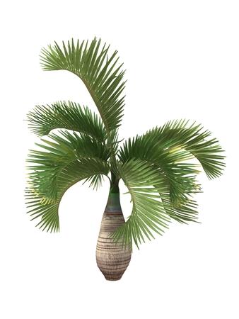 白い背景に分離された熱帯植物