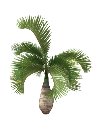 tropical plant isolated on white background,