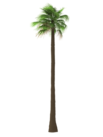 bosk: tropical plant tree isolated on white background Stock Photo