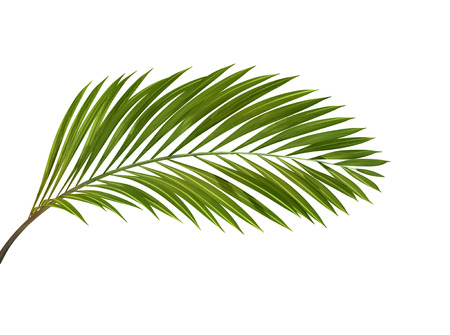 green tropical plant isolated on white background