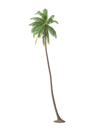 bosk: tropical plant tree isolated on white background Stock Photo