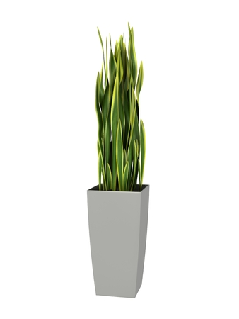 potted plant: green potted plant isolated on white background. Stock Photo