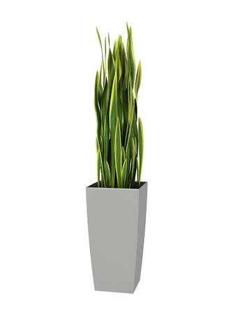 Verde planta en maceta aislado sobre fondo blanco. Foto de archivo - 42565870