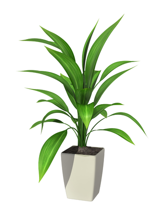 green potted plant isolated on white background. Standard-Bild
