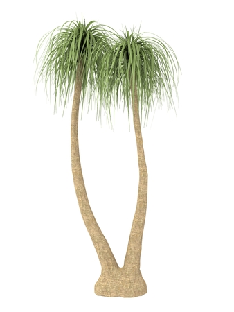 bosk: tropical plant tree isolated on white background Foto de archivo