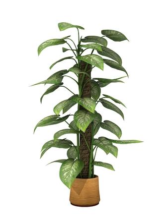 白い背景に分離された緑の観葉植物です。