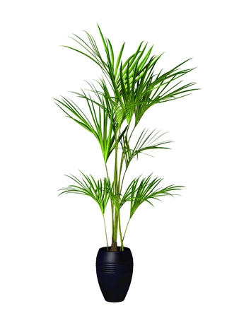 ornamental plant: green potted plant isolated on white background. Stock Photo