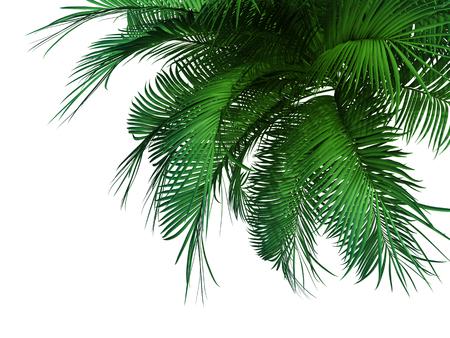 groene palm boom op een witte achtergrond.