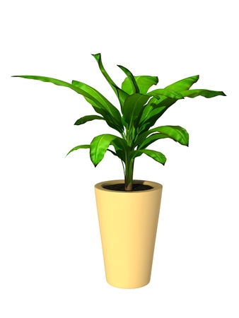 green potted plant isolated on white background. Imagens