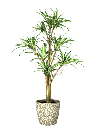 plant in pot: green potted plant isolated on white background. Stock Photo