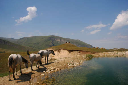 Three horses grazing near mountain lake photo