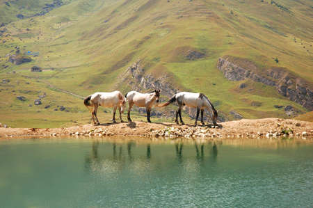 Three horses at the lake photo