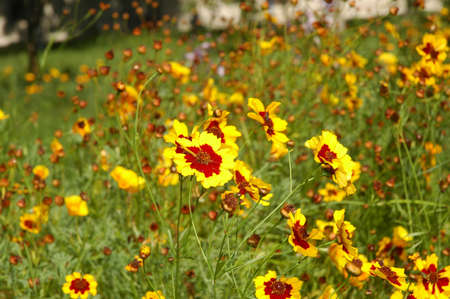 Yellow flowers in the summer Stock Photo - 541715