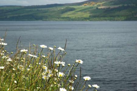 ness river: Camomiles over Lock-Ness lake Stock Photo