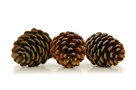 pine three: Three pine cones isolated on white Stock Photo