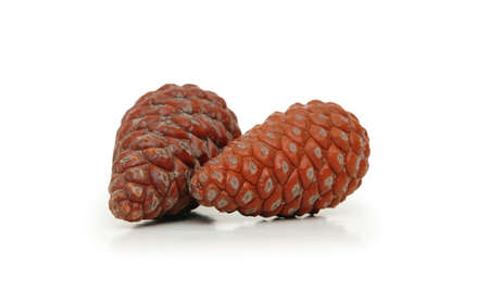 Two pine cones isolated on white Stock Photo - 582763