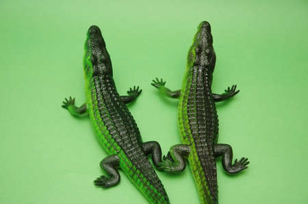Two crocodiles on green background photo