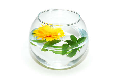 Fish tank and yellow flower isolated on white photo