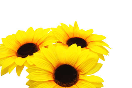 Three sunflowers isolated on the white background Stock Photo