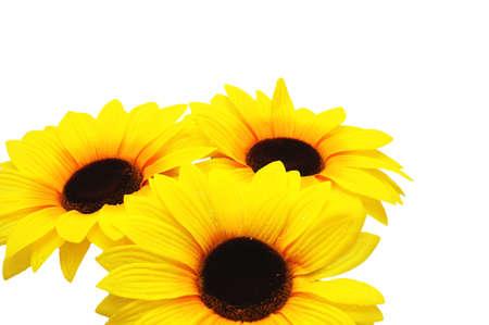 Three sunflowers isolated on the white background Stock Photo - 693524