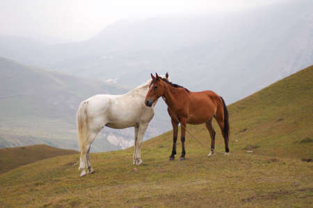 White and brown horses in mountains Stock Photo - 693442