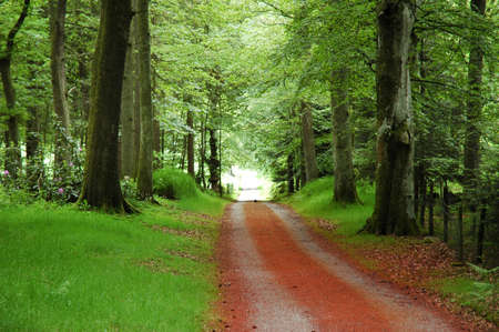 The road in the forest in summer Stock Photo
