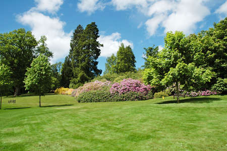 Trees and lawn on a bright summer day Stock Photo - 778896