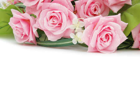 Roses on the white  - use copyspace for your text photo